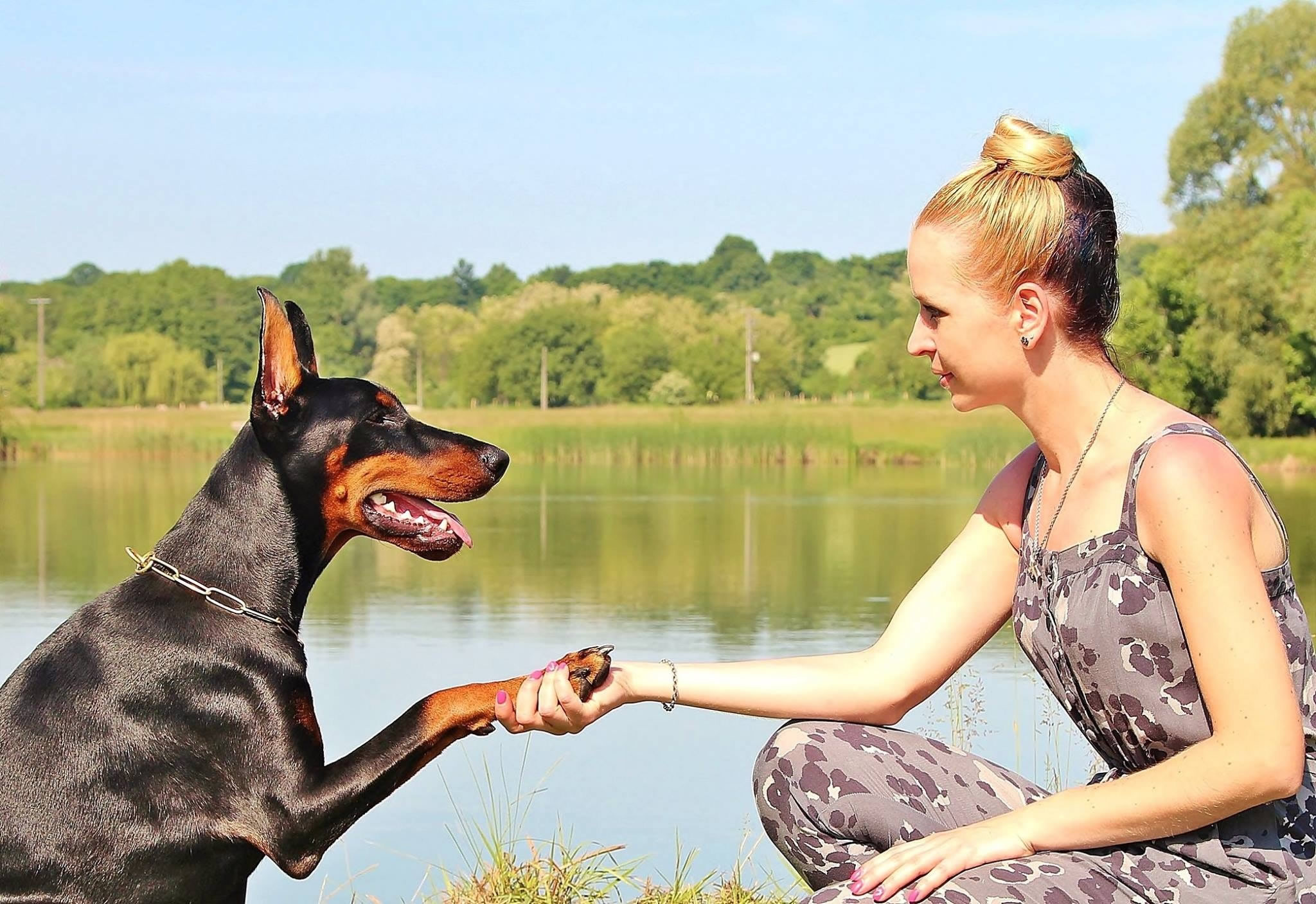 Ear Infection Treatments For Dogs and Puppies